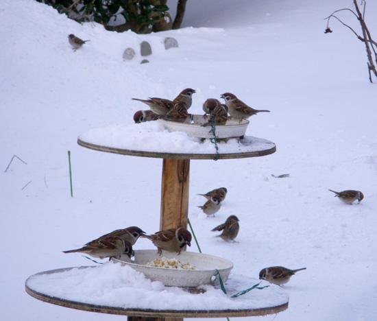 雪布団と雀と、ついでにHuuちゃん♪_a0136293_15483035.jpg