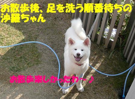 f0121712_1040324.jpg