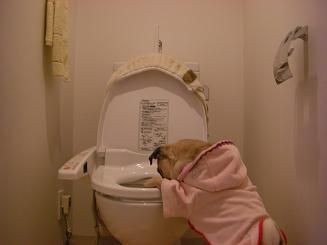 トイレは男の城なのだっ!_a0159640_17272156.jpg