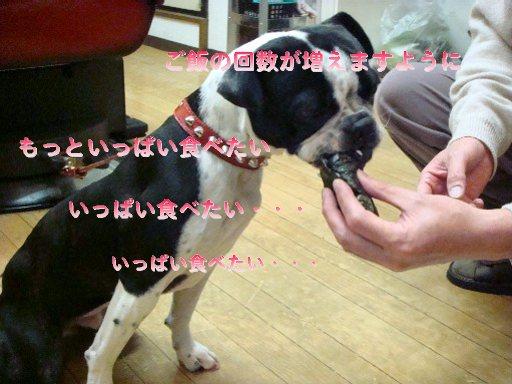 b0183452_0314659.jpg