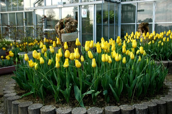 和歌山県植物公園緑花センター _b0093754_23463384.jpg