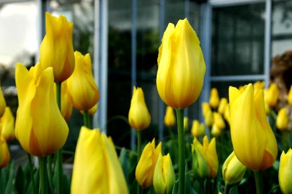 和歌山県植物公園緑花センター _b0093754_23464664.jpg