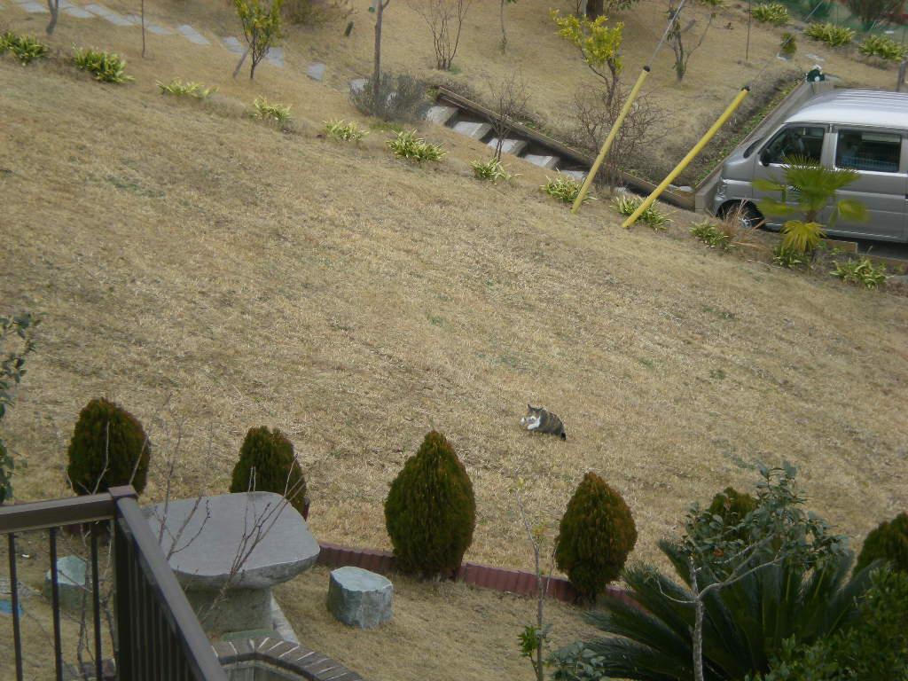 2010年2月4日(木)喧嘩したり仲良くなったり!_f0060461_14333915.jpg