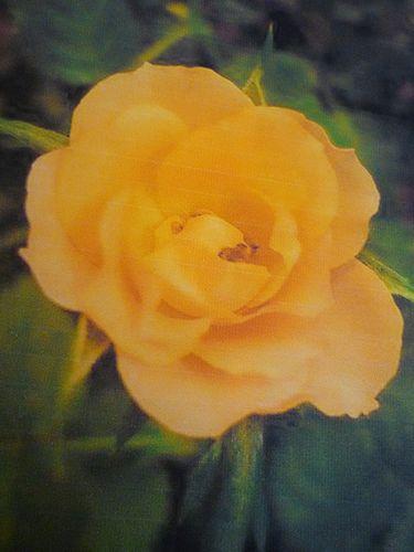 立春。。。響きあう花々 光と祈りを風にのせて。。。残すところ3日になりました。。。* *。:☆.。†_a0053662_012173.jpg