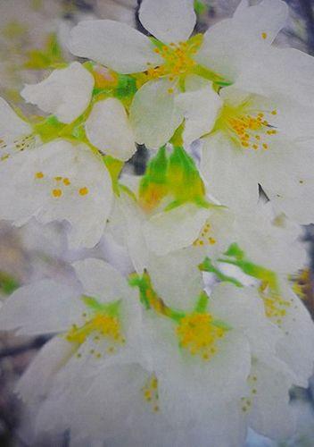 立春。。。響きあう花々 光と祈りを風にのせて。。。残すところ3日になりました。。。* *。:☆.。†_a0053662_074934.jpg