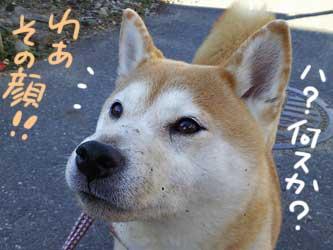 穴掘り珊ちゃん_b0057675_2294551.jpg