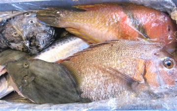 有明海の魚_c0130206_10719.jpg