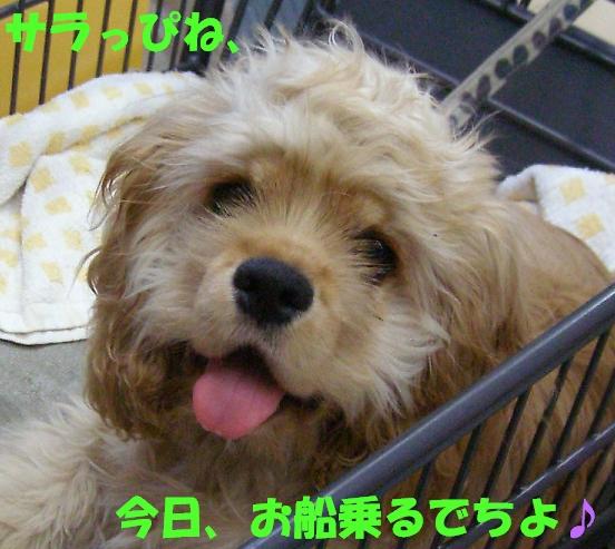 b0067012_139098.jpg