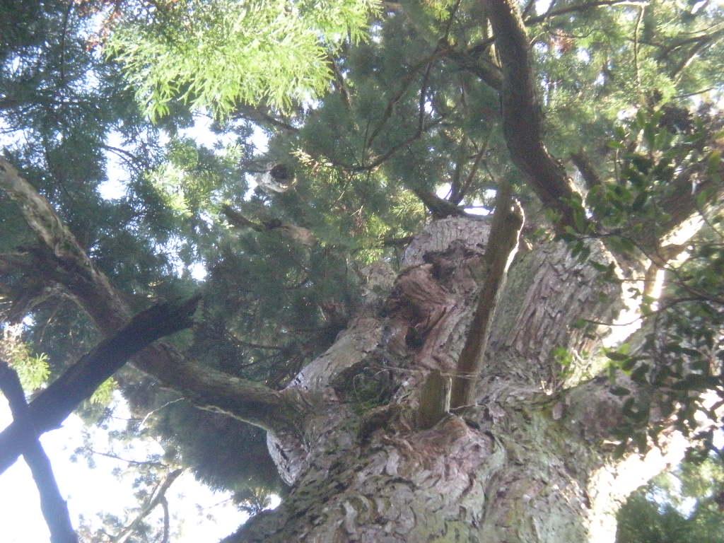 森の妖精~_a0125419_21135545.jpg