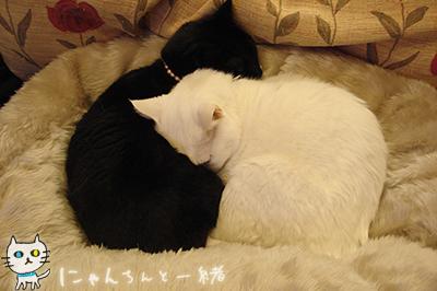 みゅー2号ママ_e0031853_2235629.jpg