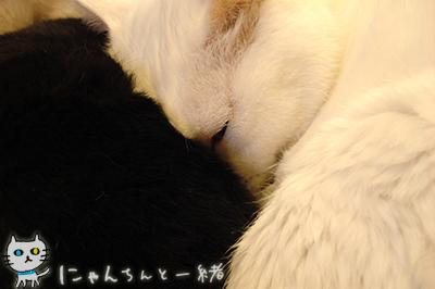 みゅー2号ママ_e0031853_2244540.jpg