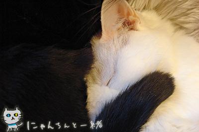 みゅー2号ママ_e0031853_2255537.jpg