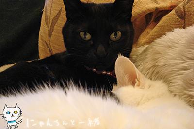 みゅー2号ママ_e0031853_2264233.jpg