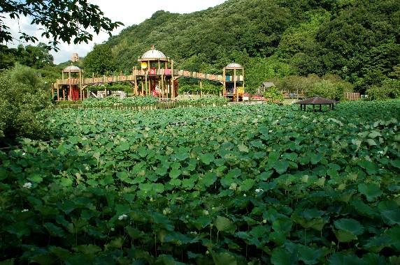 和歌山県植物公園緑花センター _b0093754_23512574.jpg