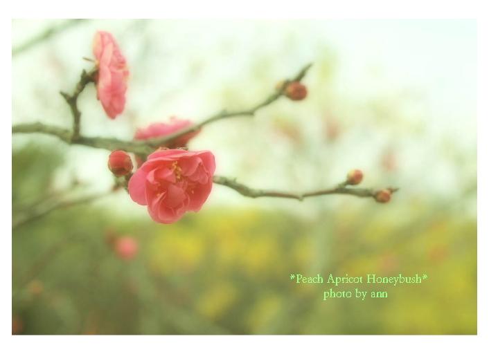 308   *sign of spring_f0202957_1752458.jpg