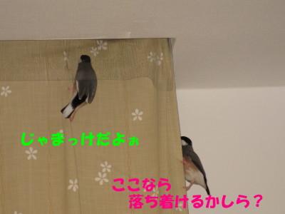 b0158061_2053278.jpg