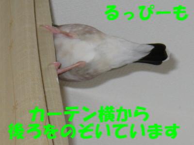 b0158061_20542133.jpg