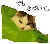 c0201577_15203137.jpg