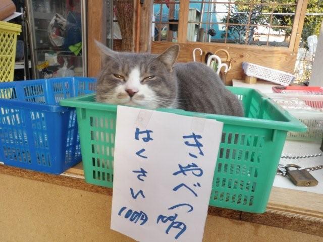 カゴ猫_d0122797_2394570.jpg
