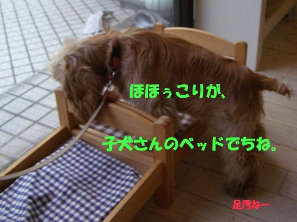 b0067012_1740019.jpg