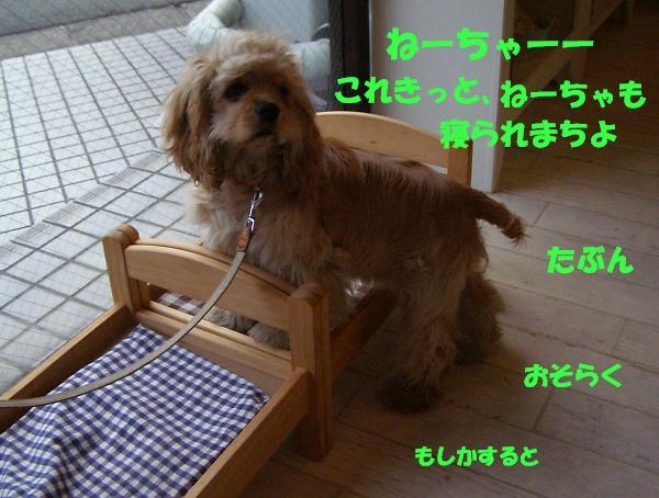 b0067012_1743397.jpg