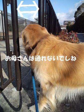b0127531_2215461.jpg