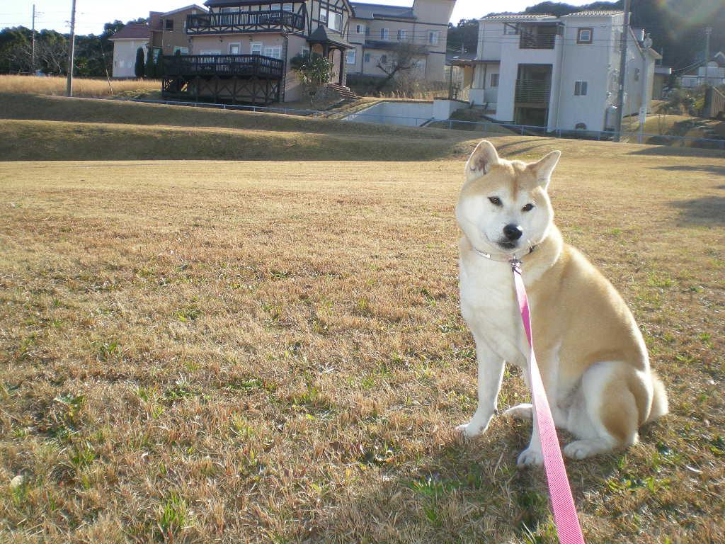 2010年2月6日(土)さぶ~い!夏が恋しい!_f0060461_1401950.jpg