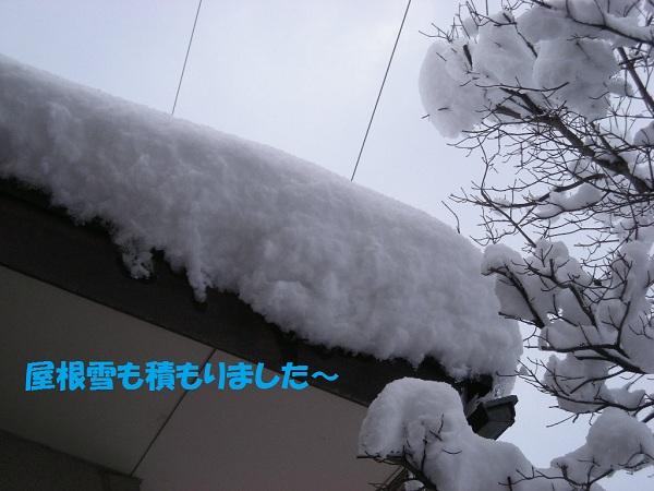 e0066883_17573585.jpg