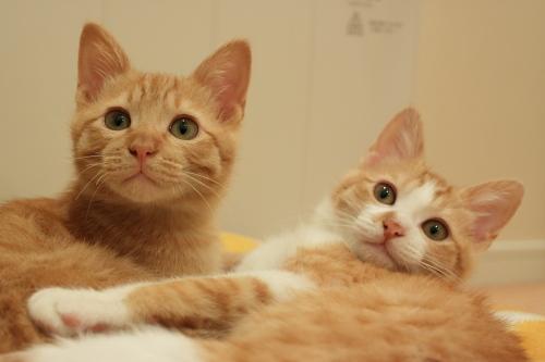 クッションベッドで寛ごうとしたところを撮影されてとまどう茶系兄妹