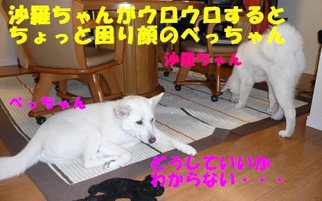 f0121712_10513172.jpg