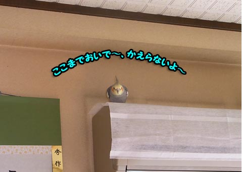 c0133013_10594192.jpg