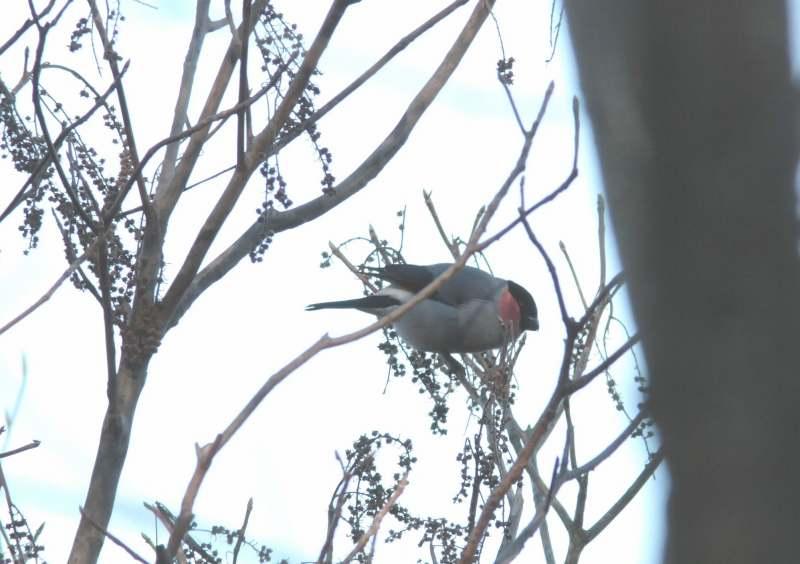 河口湖の旅 鳥さん②_f0100825_2227313.jpg