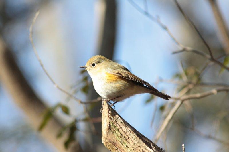 河口湖の旅 鳥さん②_f0100825_22293440.jpg