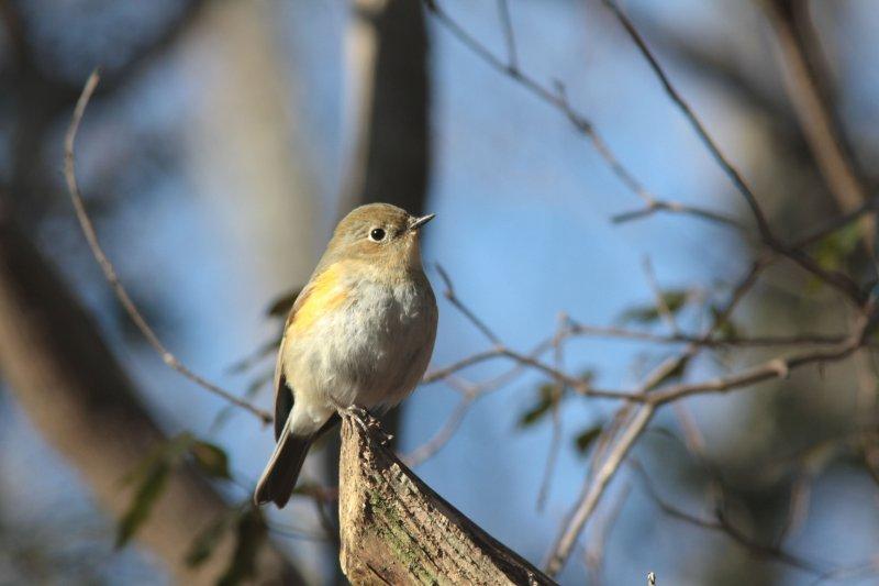 河口湖の旅 鳥さん②_f0100825_22294710.jpg