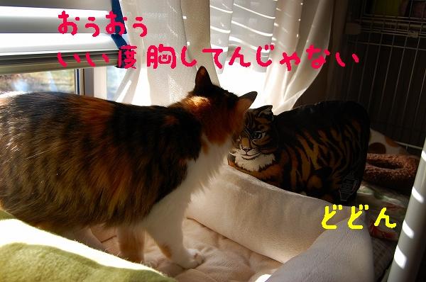 c0181639_1461335.jpg