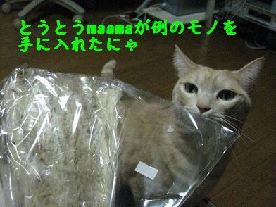 b0151748_20123288.jpg