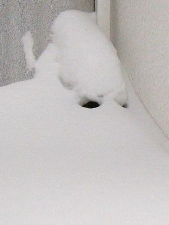 雪、雪、雪_f0116158_10552970.jpg