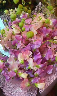 春風のように・・・_c0137266_1834459.jpg