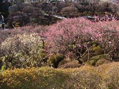 お散歩、でも風強い (大田区)_d0132289_1974143.jpg