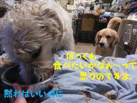 f0176830_22151124.jpg