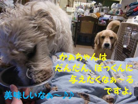 f0176830_2219311.jpg