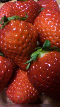 莓(イチゴ)_d0004447_2132938.jpg