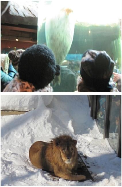 MOTTAINAIツアー/旭山動物園レポート_e0105047_15213293.jpg