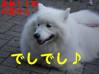 a0166954_1932597.jpg