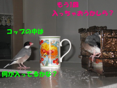 b0158061_21786.jpg