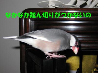 b0158061_2185383.jpg