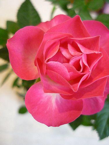 代官山のバレンタイン ☆甘いチョコレート色の検索ワードランキング。。。.☆*:.。.☆*† _a0053662_1015744.jpg