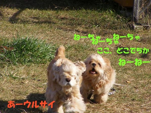 b0067012_0123058.jpg
