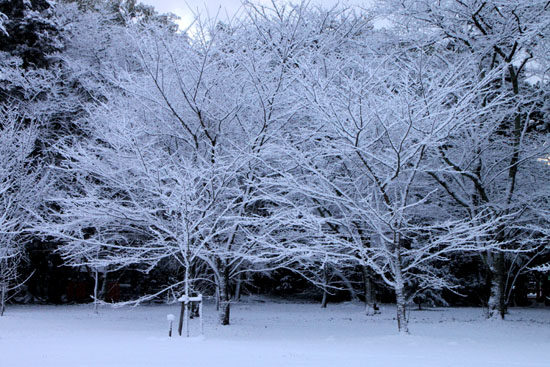 上賀茂神社 雪景色_e0048413_21341739.jpg