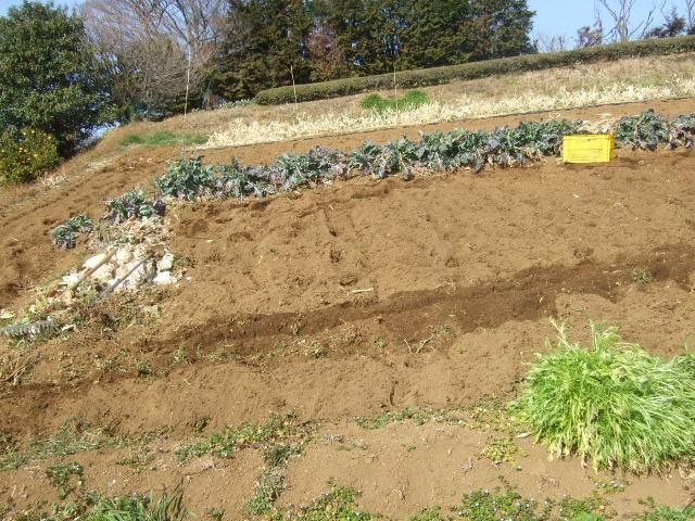 可愛いお客さんが.....野菜畑に!_b0137932_16125059.jpg